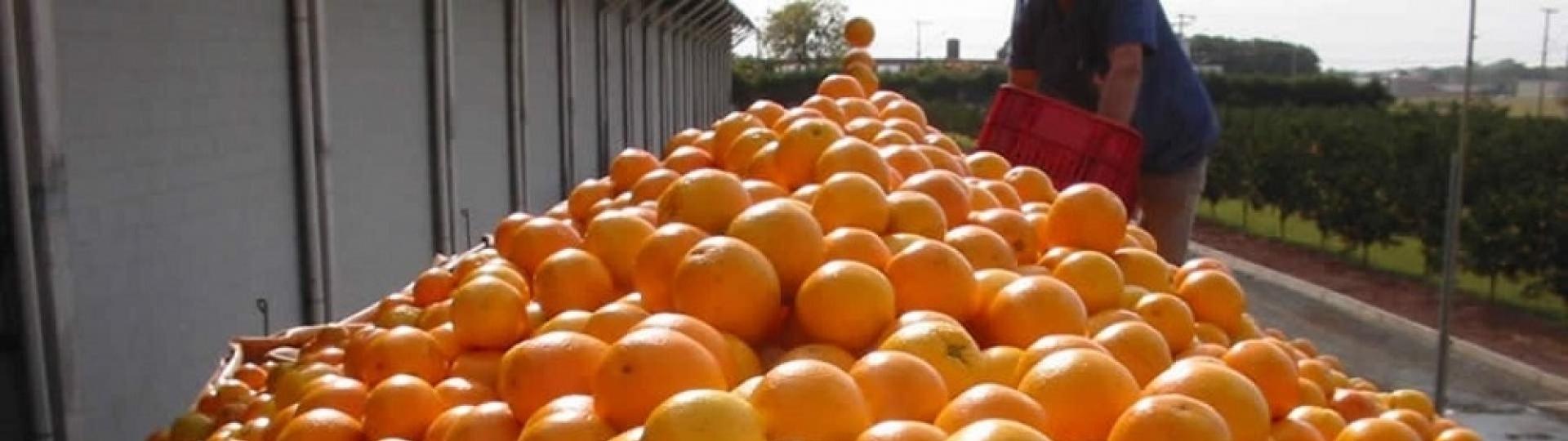 Bebedouro se move com o agronegócio