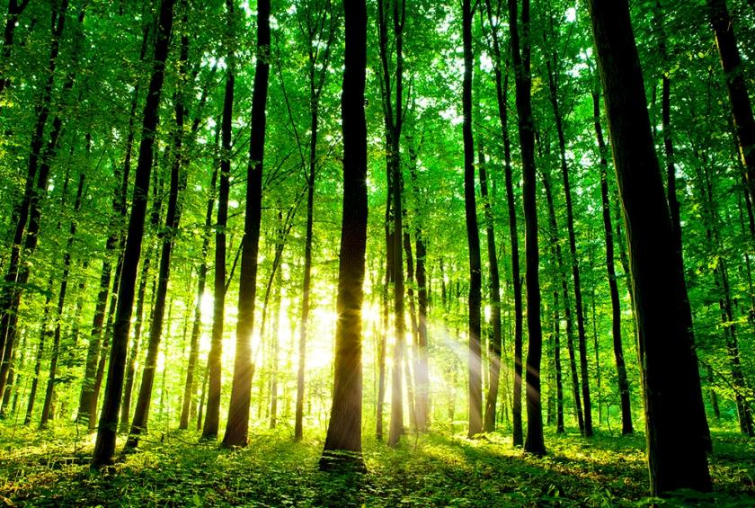 Florestas do Mundo