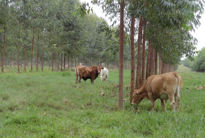 Descarbonização da Agropecuária