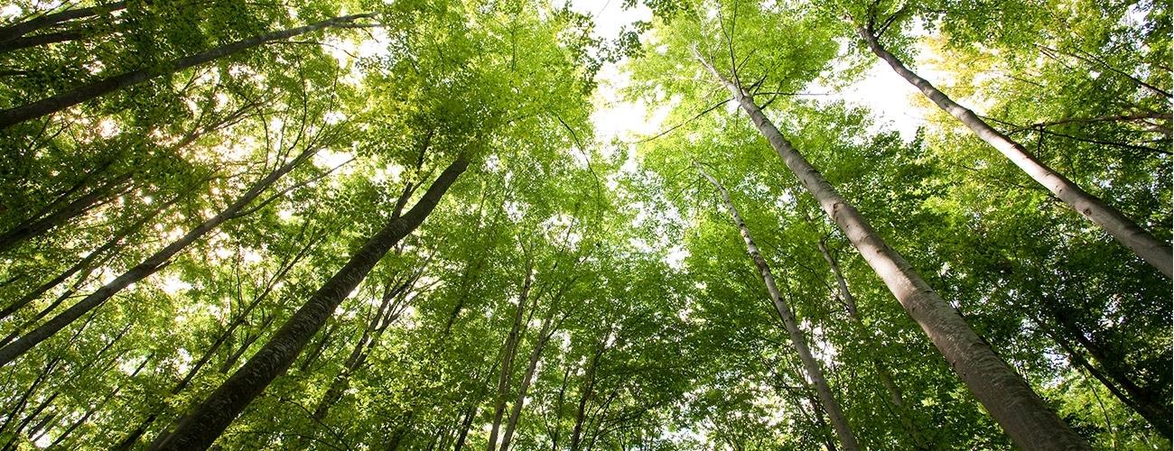 A Dinâmica das Florestas no Mundo