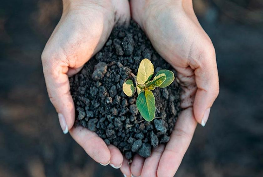 Fatos e mitos sobre agricultura e meio ambiente