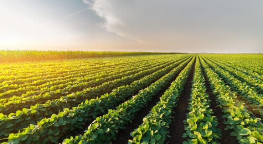 A agropecuária brasileira deve crescer 2,9% em 2020
