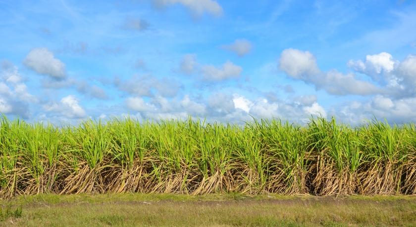 Produtores comemoram primeira venda de créditos de cana-de-açúcar via Bonsucro
