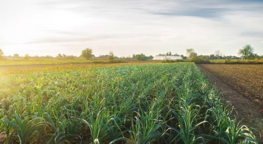 Plataforma ajudará na análise dos dados do Cadastro Ambiental Rural